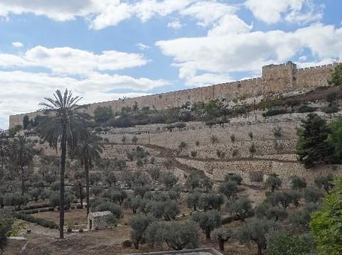 Les oliviers au pied du Mont des Oliviers de Jérusalem. Le bois de ces croix proviennent de ces arbres.